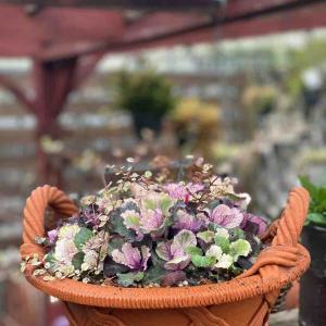 見元園芸さんのウサギのビオラを色々使って寄せ植え。