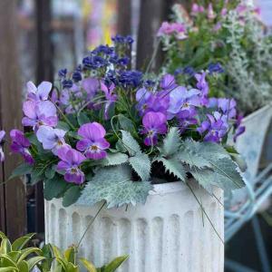 冬の寒さに強いお花を使って春まで楽しんじゃう〜