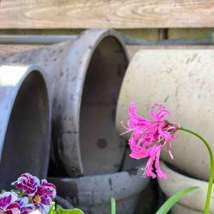 地味〜な作業も、地味〜な肥料やりも春を待ちわびて!
