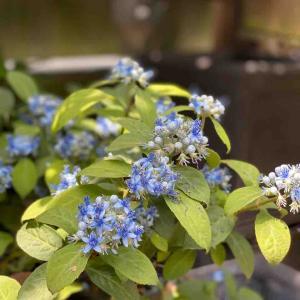 渋系の寄せ植えに憧れて、渋いお花を選んでいたら!?