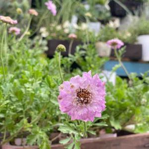 お花屋さんみたいな写真を今日は。