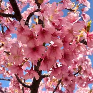 春が来た🌸