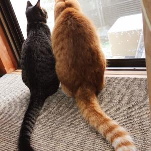 猫の愛情表現♪