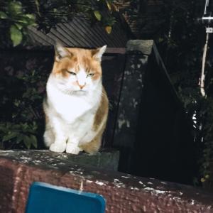忍び猫Part2