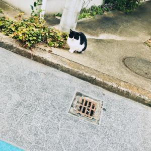 忍ばず猫☆