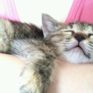 猫の寝る場所、、