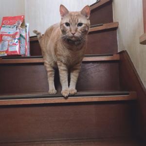 猫との距離のつめかた