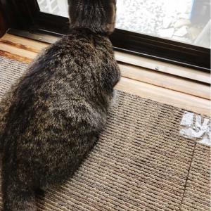 背中を向ける猫♪♪♪