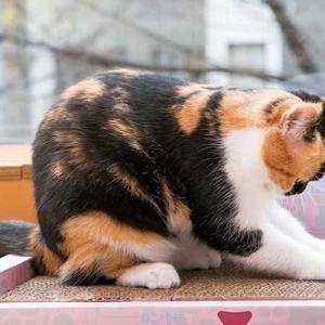 猫は興奮すると爪とぎをしたくなるんです♪