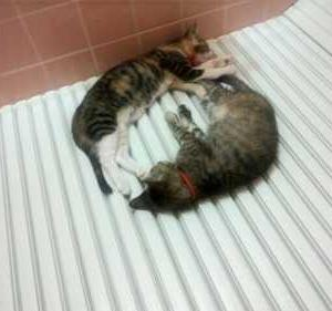 洗われるのは苦手だけど、浴室の中は好きな猫が多いよう