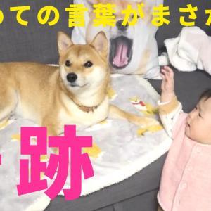 娘がはじめて言った言葉が「愛犬の名前」・・なんて奇跡あると思う?