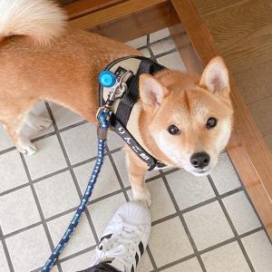 【悲報】まさかのぎっくり腰に。散歩中の「あれ」が一番しんどい