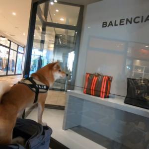犬同伴OKなので一緒に買い物に連れていくか、それとも家でお留守番の方がいいのか。