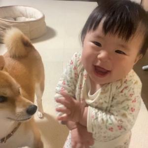 iPhoneのインカメに映る自分を見た柴犬と娘の反応が対照的すぎた