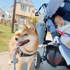 たまには気分転換に家族みんなでまったり散歩