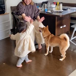 散歩帰りハイテンションになる柴犬と、それを見てさらに大興奮してしまう娘