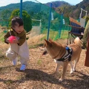 【アイリス更新第4回目】〜犬も子供もみんな外が大好き〜