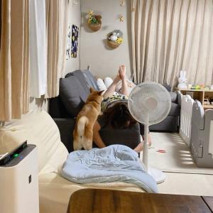 ママのいる場所にちょこんとついてくる可愛い柴犬