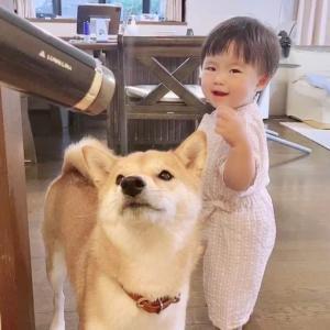 髪を乾かしていると柴犬と娘がのぞきにやってくる