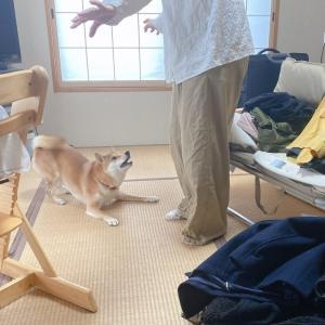 断捨離で片付けてる部屋に柴犬がやってくるとなかなか進まない話