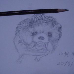 小動物を描きました(*^-^*)