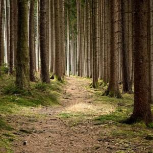 どの道を行くかも大切だけど、どんな気持ちで行くかも大切じゃないかな