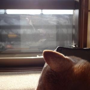 陽だまり風景03 冬の昼下がり