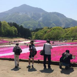 芝桜の丘 秩父の羊山公園