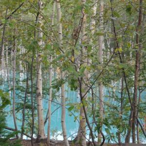 北帰行①白樺街道、青い池
