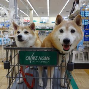 犬と一緒に入店できる店