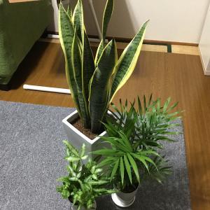 観葉植物届きました