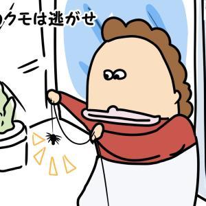 【昼のクモは】迷信あれこれ【逃がせ】