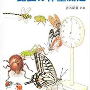 心を育てるクリンヴィアのえほんだな『昆虫の体重測定』