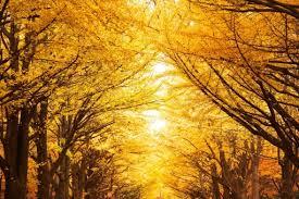 知らない人ばかり!秋の味覚『○○○○』の驚きの栄養!!