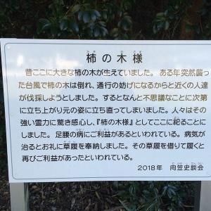 【都市伝説】足腰にご利益がある磐田市の『柿の木様』 !