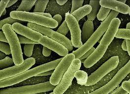ウイルスと細菌の違い、わかりますか??