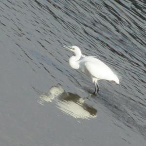 白い鳥の白いリボン