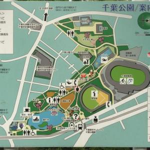 千葉公園 心も体も健康。さらにお財布も喜ぶ。紫陽花やオオガハス見れて、散歩、ジョギング、ボート