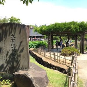 大賀ハス 千葉公園 令和3年6月13日
