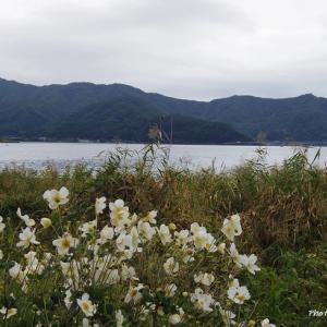 東京+α おもてなしの旅⑪ 河口湖と神戸土産