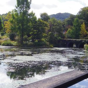 (GOTOトラベル★軽井沢)【軽井沢レイクガーデン】レマン湖の畔で秋を感じる。