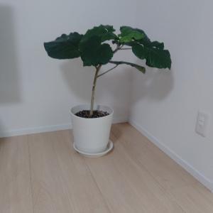 新居に増やしたい観葉植物