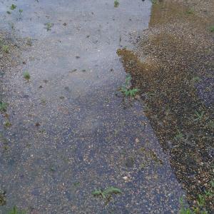 雨が降ると池になる庭。