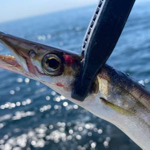 【釣行情報】ショアジギングで三浦半島の磯をランガン!!遊んでくれた魚は…??