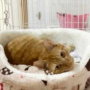 スースーの猫ベッド