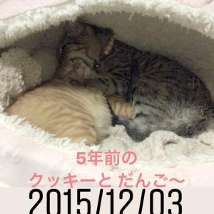 朝から夜まで猫猫猫の日