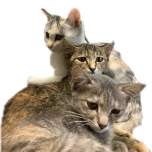 パステルカラーの三姉妹