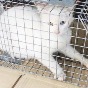 白猫ゆりちゃん