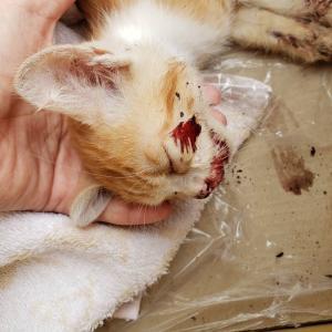 事故で負傷の子猫
