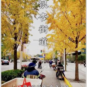 上海の銀杏並木〜常德路 南京西路〜